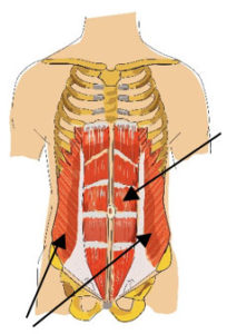 gerader-bauchmuskel